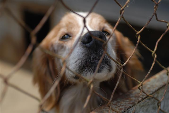 Did you know over 5 million Cats and Dogs are turned into animal shelters?